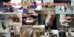 EU Parliament, please help save the lives of strays in ROMANIA !