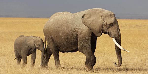 Stop Export of Zimbabwe's Baby Elephants
