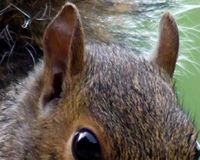 Stop the grey squirrel cull in England and Scotland