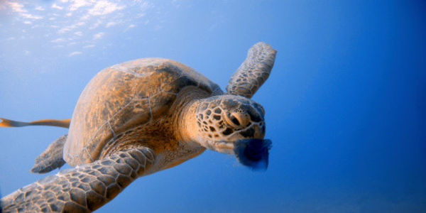Stop Sea Turtles Dying around India