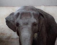 Save Horace the elephant
