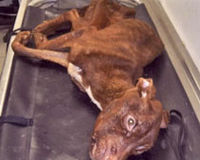 Patrick starved dog thrown down garbage chute