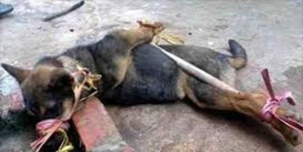 Petition: MAKE DAVID CAMERON STOP ANIMALS BEING SLAUGHTERED FOR MEAT