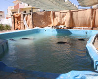 STOP dolphin captivity in Egypt