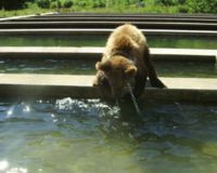 Save Bears from captivity in Gornji Vakuf, Bosnia Herzegovina