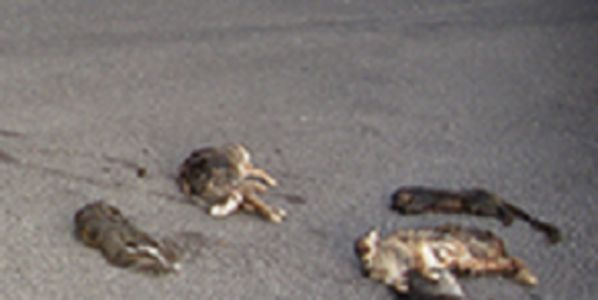 Find People Responsible For Tossing Dead Animals On Radio Station Driveway in Protest