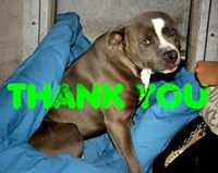 Click to aid in animal rescues