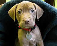 End the Ban of Pitbulls in Ontario