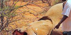 Stop the Brutal Killing of African Elephants