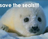 Against the Seal Hunt
