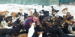 Support Free-run Dog Sanctuary in Serbia