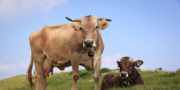 Demand that the FDA Make Mandatory Restrictions on Antibiotic use in livestock