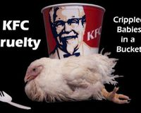 LETS GET KFC KENTUCKY FRIED CHICHEN TO GO FREE RANGE