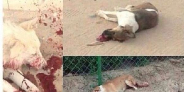 Stop Killing Innocent Dogs In Kuwait