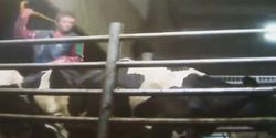 Canada - Implement Better Policies At Dairy Farm to Avoid Further Abuse of Cows