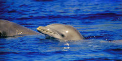 End the Taiji Dolphin Slaughter!