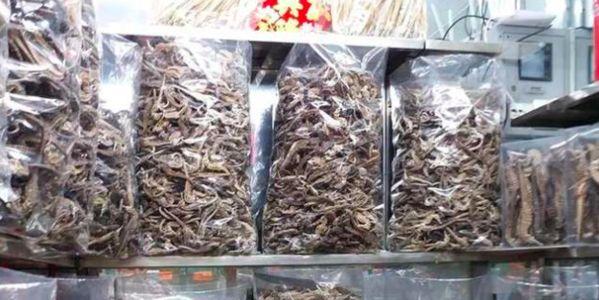 dead seahorses in bags