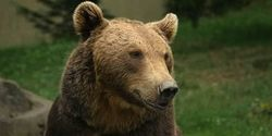 Save Daniza, the Mama Bear!