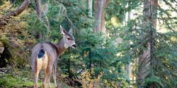 Say no to the Deer Cull in the Kennebecasis Valley