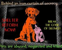 DEMAND GOVERNMENT REGULATIONS OF ANIMAL SHELTERS IN THE U.S.