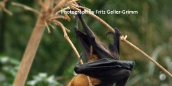India - Stop Classifying Fruit Bats as Vermin