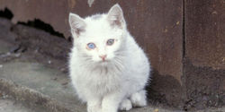 BAN the Trapping & Killing of Ireland's Cats