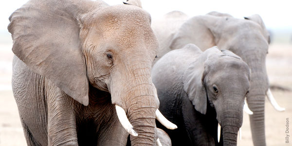 Pledge to Stop Illegal Wildlife Poaching