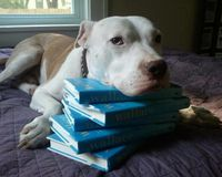 GET WALLACE THE PIT BULL ON THE ELLEN SHOW!