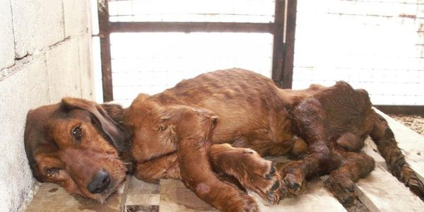 Demand Investigation into Horror Shelter in Hresa, Bosnia