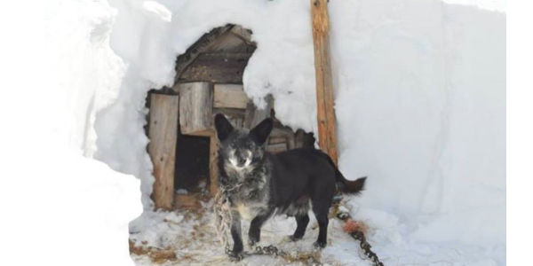 Woman rescues dog from snowy prison charged with theft!