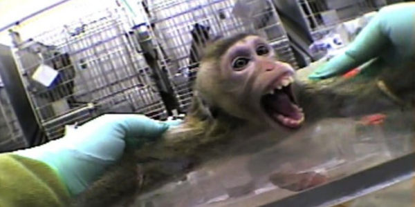 Stop Vivisection at University of California
