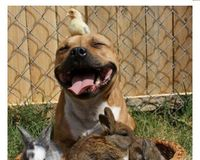 Stop The Band On PitBulls