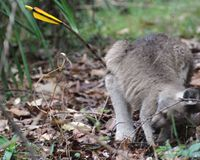 Stop The Slaughtering of Australia's Native Animals