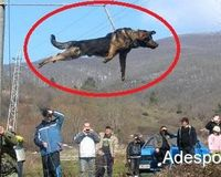 Take Action Against Bulgarian Dog Spinning!