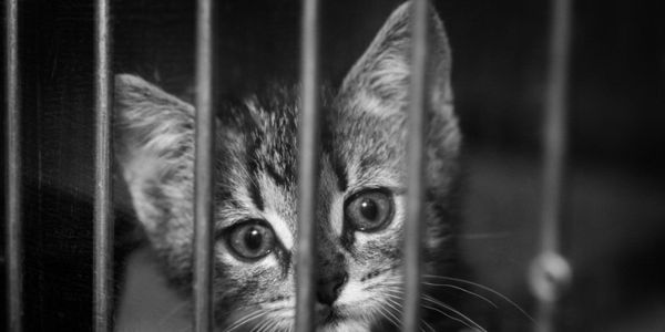 petition: Colorado: Give Abused Cats and Dogs a Voice in