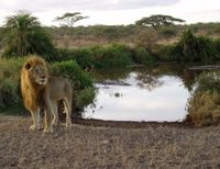 Tanzania- Don't Sell the Serengeti to Safari Hunters