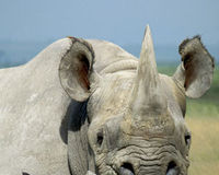 Tell the South African government to do more to protect wildlife from poaching!