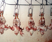 Add Poultry To Humane Methods of Slaughter Act