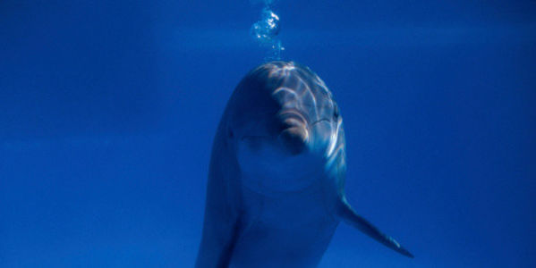 US Navy: Don't Use Dolphins in War Drills!