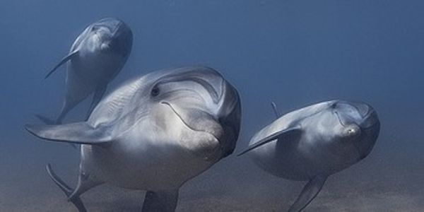 Stop Japan Dolphin-Killing Town from Opening Marine Park to Fund Slaughter