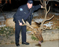 Thank Colorado DA for Prosecuting Police Poaching