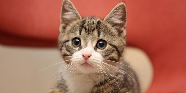 Save 60 cats from unnecessary euthanization!