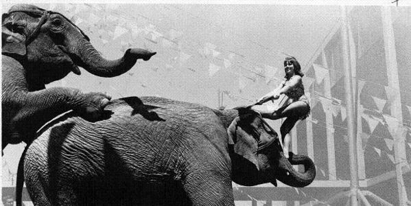 Shrine Circus: Stop Using Exotic Animals Nationwide!