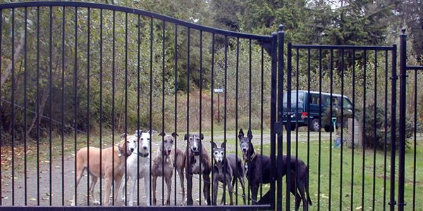 Protect Hunting Dogs with Animal Welfare Law in S. Carolina