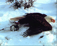 Federal Ban on Steel Jaw Leghold Traps
