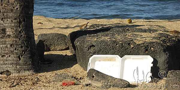 Tell Hawaii County to ban Styrofoam food containers!!!