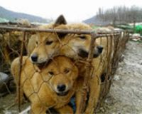 Stop South Korea's Torture of Dogs and Cats