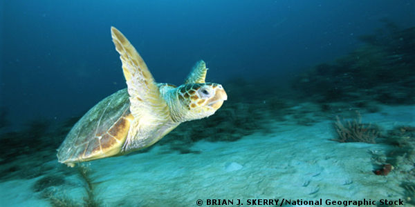 Mexico: Protect Critically Endangered Sea Turtles
