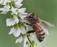 Ban Pesticides Killing Birds, Bees and Butterflies