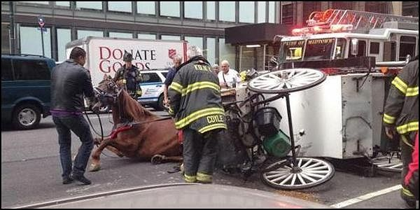 Ban Horse Carriages in NYC